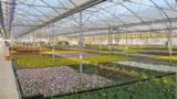 10 ha Gewächshausfläche gibt es bei Gartenbau Salzwedel