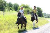 frei und im Kontakt mit dem Pferd!