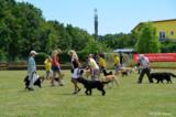 Mitglieder des Kitzinger-Hundesportvereins e.V. bei einer Vorführung