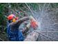 ASPEN Bio -Sägekettenöl ganzjährig einsetzbar