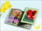 Frühlingstipp von printeria: verstaubte Fotoschätze wach küssen und in zauberhafte Fotogeschenke verwandeln