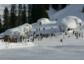 Blauäugig durch die Kitzbüheler Alpen beim Huskyschnuppertag