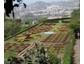 Gartenreisen mit Blaguss nach Madeira und Südengland