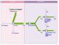 Software für das Erstellen von Ökobilanzen – Umberto NXT LCA setzt neue Maßstäbe