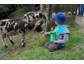 Wildpark-Rallye für die Kids + Romantik für die Eltern = Spaß für alle