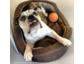 Da wird der Hund verrückt: Deutsche Arbeitnehmer fordern einen Vierbeiner im Büro